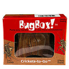 BugBox!™ Live Crickets