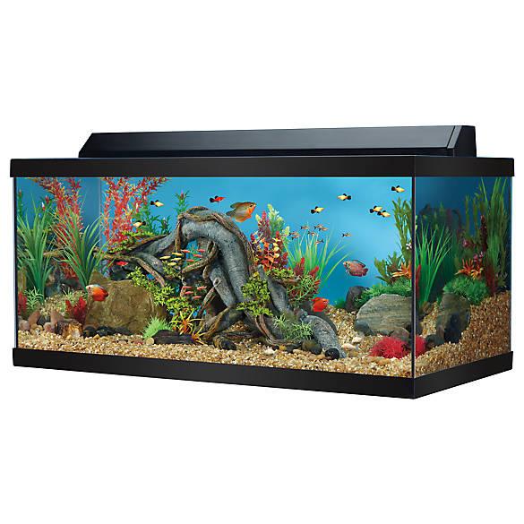 Top fin 40 gallon hooded aquarium fish aquariums petsmart for Petsmart fish aquariums