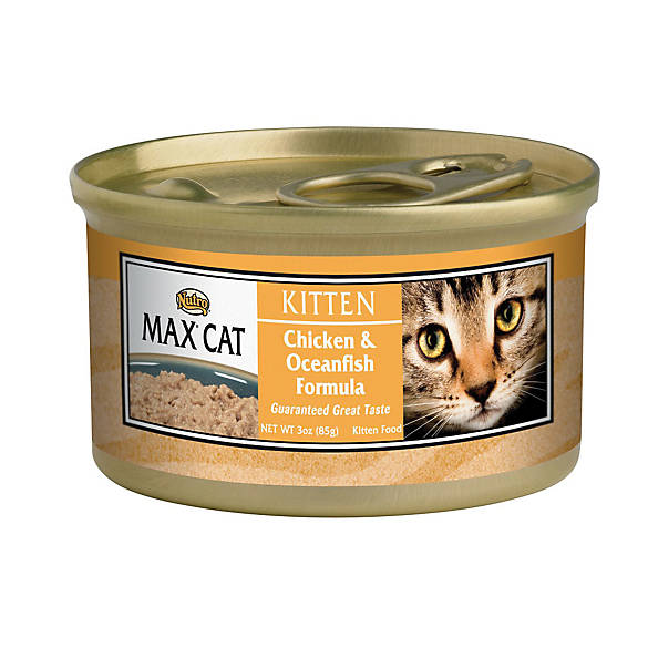 Where Can I Buy Nutro Cat Food