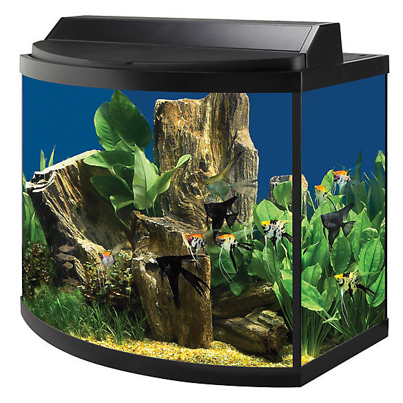 aqueon 36 gallon deluxe aquarium kit fish starter kits