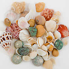 Top Fin® Seashell Aquarium Decoration