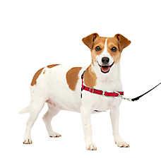 Dog Harness: Large Dog & Puppy Harness Vests | PetSmart