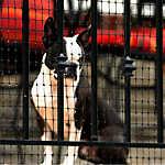 Cardinal Pet Gate Deck Netting