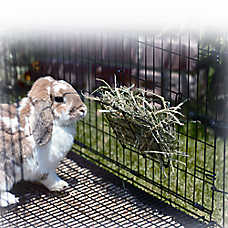 Precision Pet Products® Hay Rack