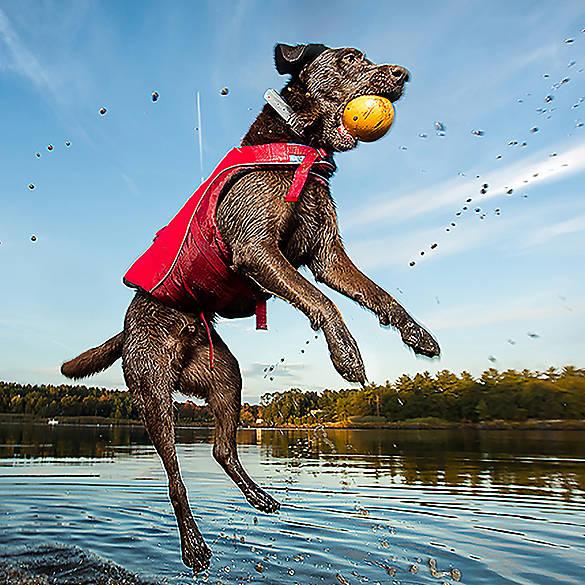 Kurgo Surf N Turf Dog Life Jacket Dog Life Jackets Swim Suits Petsmart