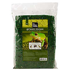 All Living Things® Green Reptile Moss
