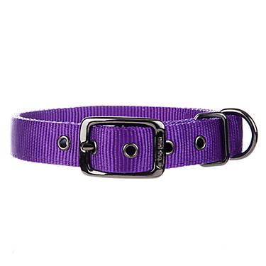 Best Dog Collars Pendelton