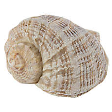 All Living Things® Shell Habitat Decor