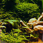Top Fin® Tropical & Riverbed Aquarium Background