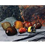 PetSmart Mixed Nerite Snail