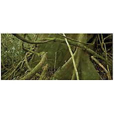 National Geographic™ 3-D Rainforest Aquarium Background
