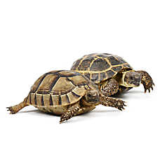 Pet Reptiles For Sale: Snakes, Geckos, Turtles & More ...