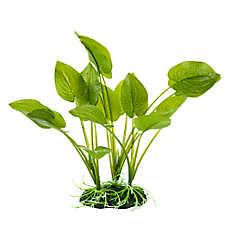 National Geographic™ Heart Leaf Aquarium Plant