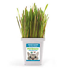 Pet Greens® Grain Free Organic House Blend Cat Grass