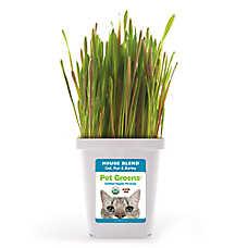 Pet Greens® Grain Free Organic House Blend Cat Grass