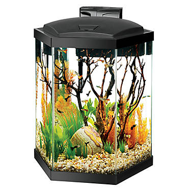 aqueon 20 gallon hex aquarium starter kit fish starter