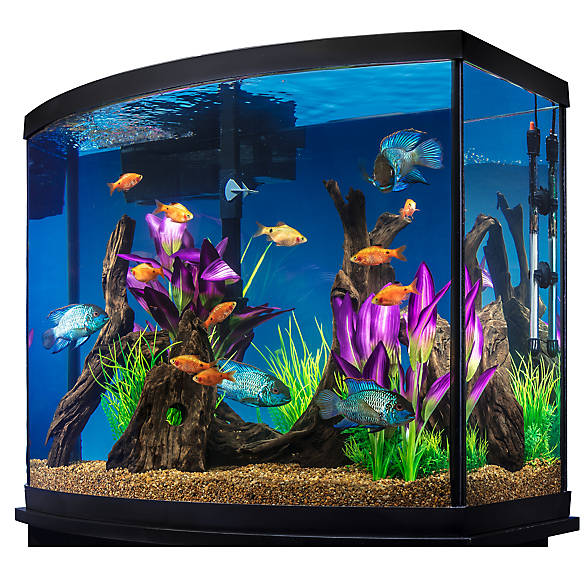 marineland 38 gallon aquarium starter kit fish starter