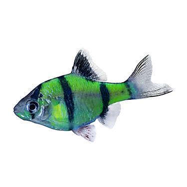 Glofish electric green glofish fish goldfish betta for Betta fish at petsmart
