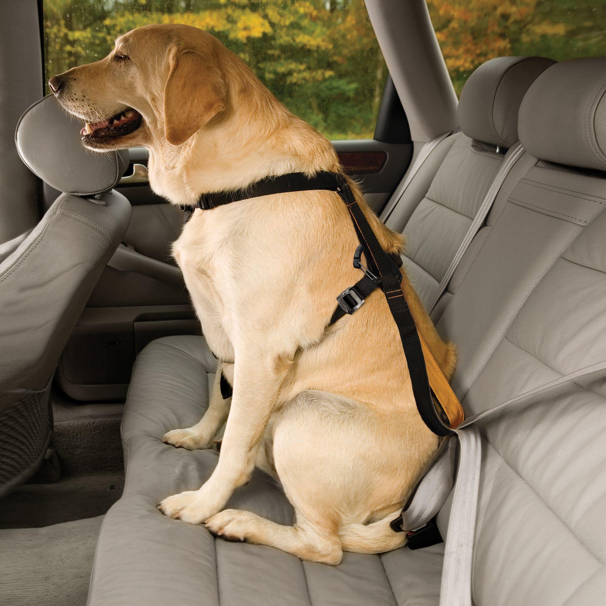 Dog Car Harness | dog Harnesses