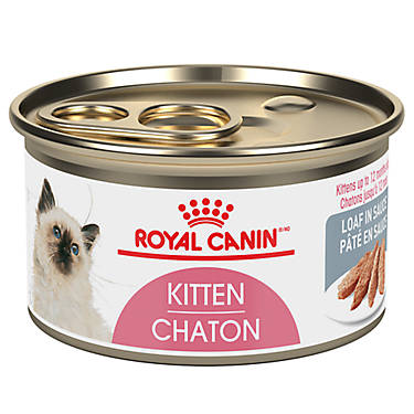 Royal Canin Pregnant Cat Food