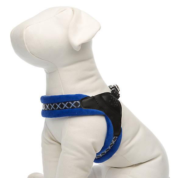 Petsmart Dog Collars