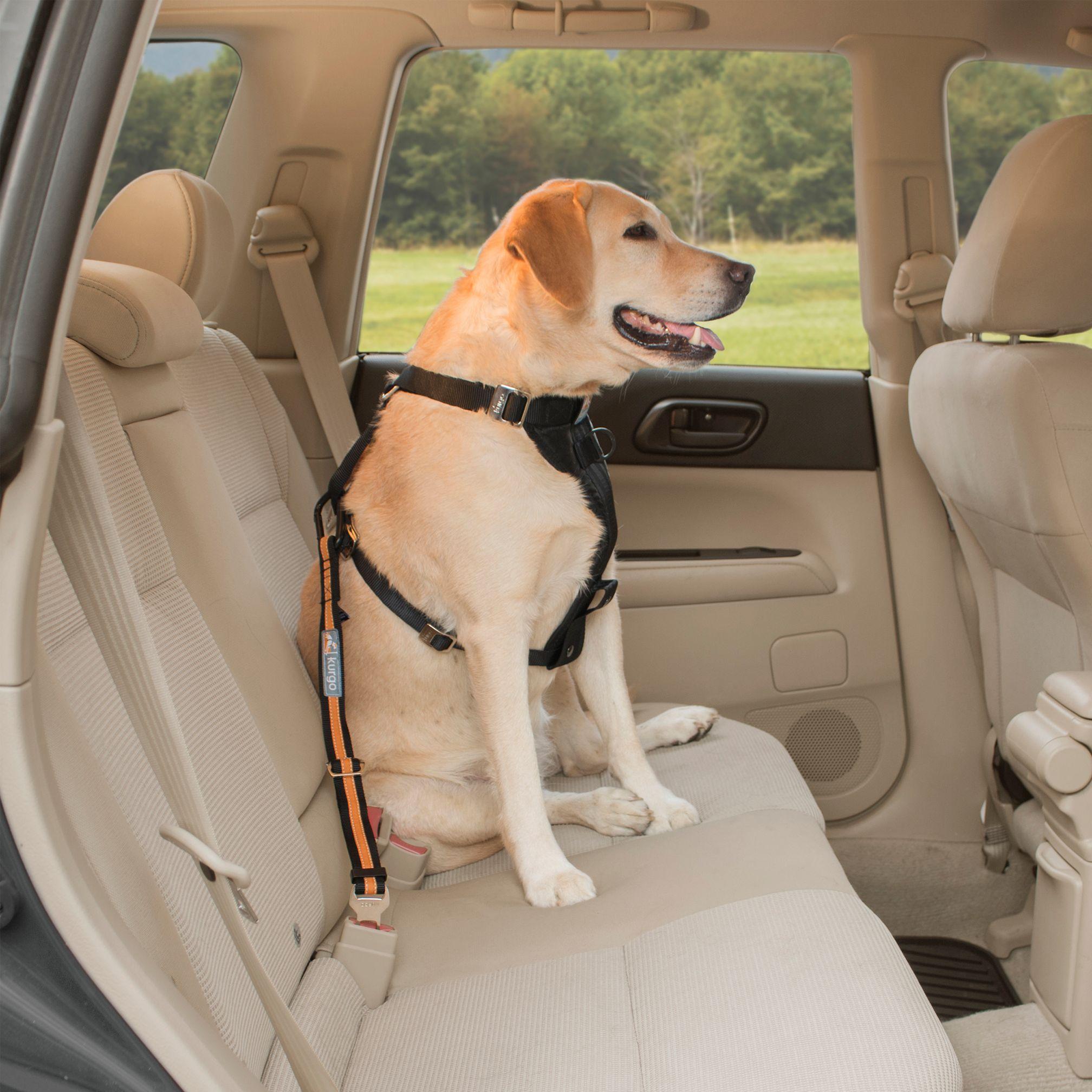 Kurgo Direct To Seat Belt Tether Dog