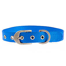 Top Paw® Signature Buckle Dog Collar