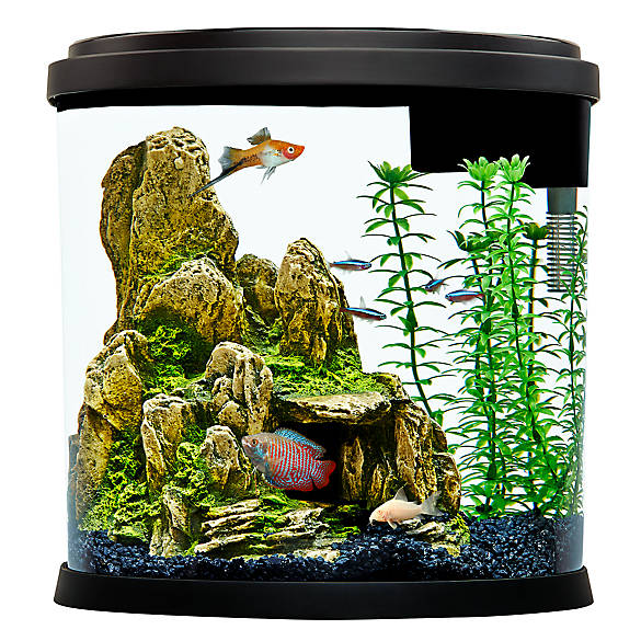 top fin® 3.5 gallon enchant aquarium | fish starter kits | petsmart