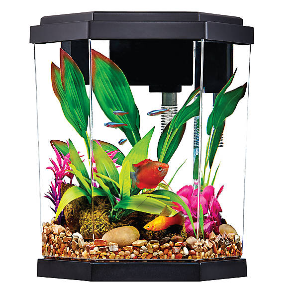 Top Fin® 2 Gallon Intrigue Aquarium Kit | Tuggl