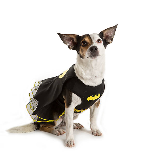 DC Comicsu0026trade; Batman Dress Pet Costume  sc 1 st  PetSmart & Dog Costumes: Shop Small u0026 Large Dog Costumes | PetSmart