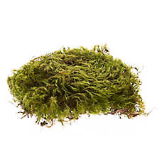 Zoo Med™ Frog Moss
