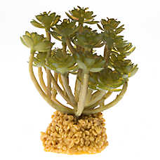All Living Things® Succulent Reptile Ornament