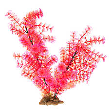 Top Fin® Pink Bush Aquarium Plant