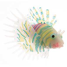 Fish Sale Amp Discount Fish Supplies Petsmart