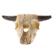 All Living Things® Bull Skull Reptile Ornament