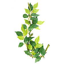 National Geographic# Leafy Vine Aquarium Plant