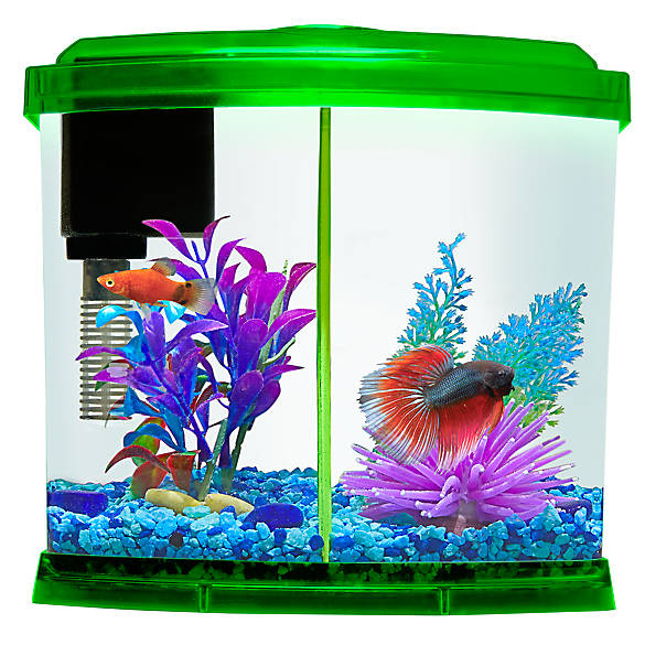 Top fin betta 7 day feeder review wiring diagrams wiring for Automatic fish feeder petsmart