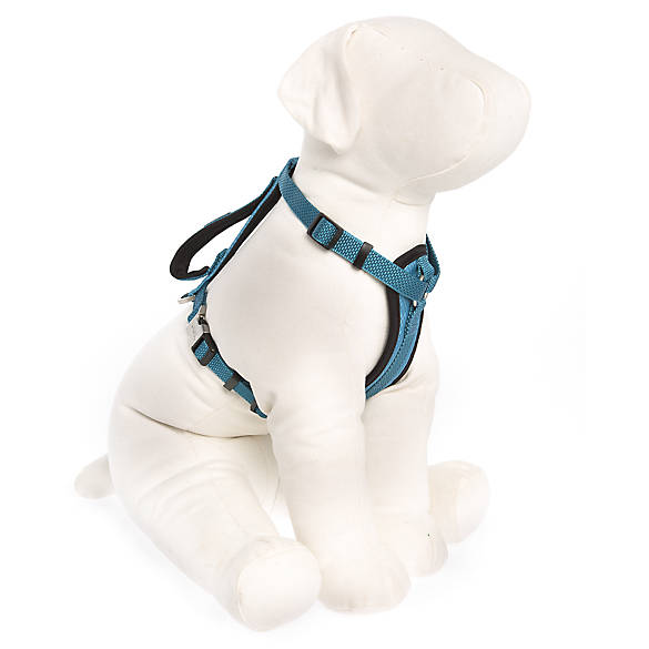 KONG® Comfort Dog Harness | dog Harnesses | PetSmart