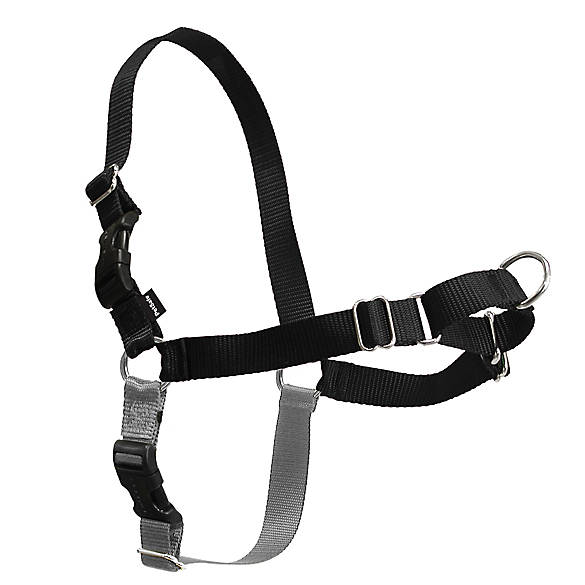 PetSafe® Easy Walk Dog Harness | dog Harnesses | PetSmart