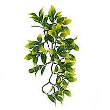 All Living Things® Hanging Terrarium Plant