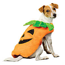 Thrills & Chills™ Halloween Pumpkin Dog Costume