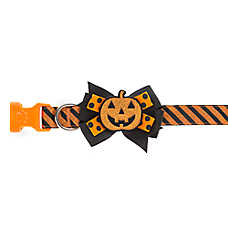 Thrills & Chills™ Halloween Pumpkin Bow Tie Dog Collar