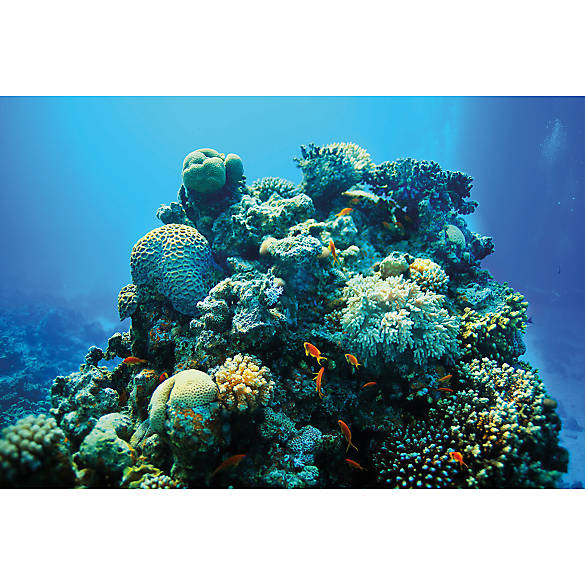 Coral Reef Background: Top Fin® Coral Reef & Ombre Reversible Aquarium Background