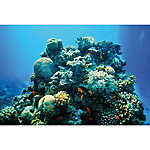 Top Fin® Coral Reef & Ombre Reversible Aquarium Background