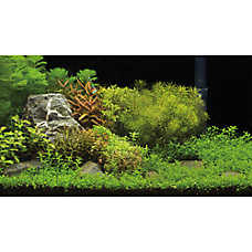 Top Fin® Underwater Garden & Riverbed Reversible Aquarium Background