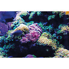 Top Fin® Coral Stags & Reef Reversible Aquarium Background