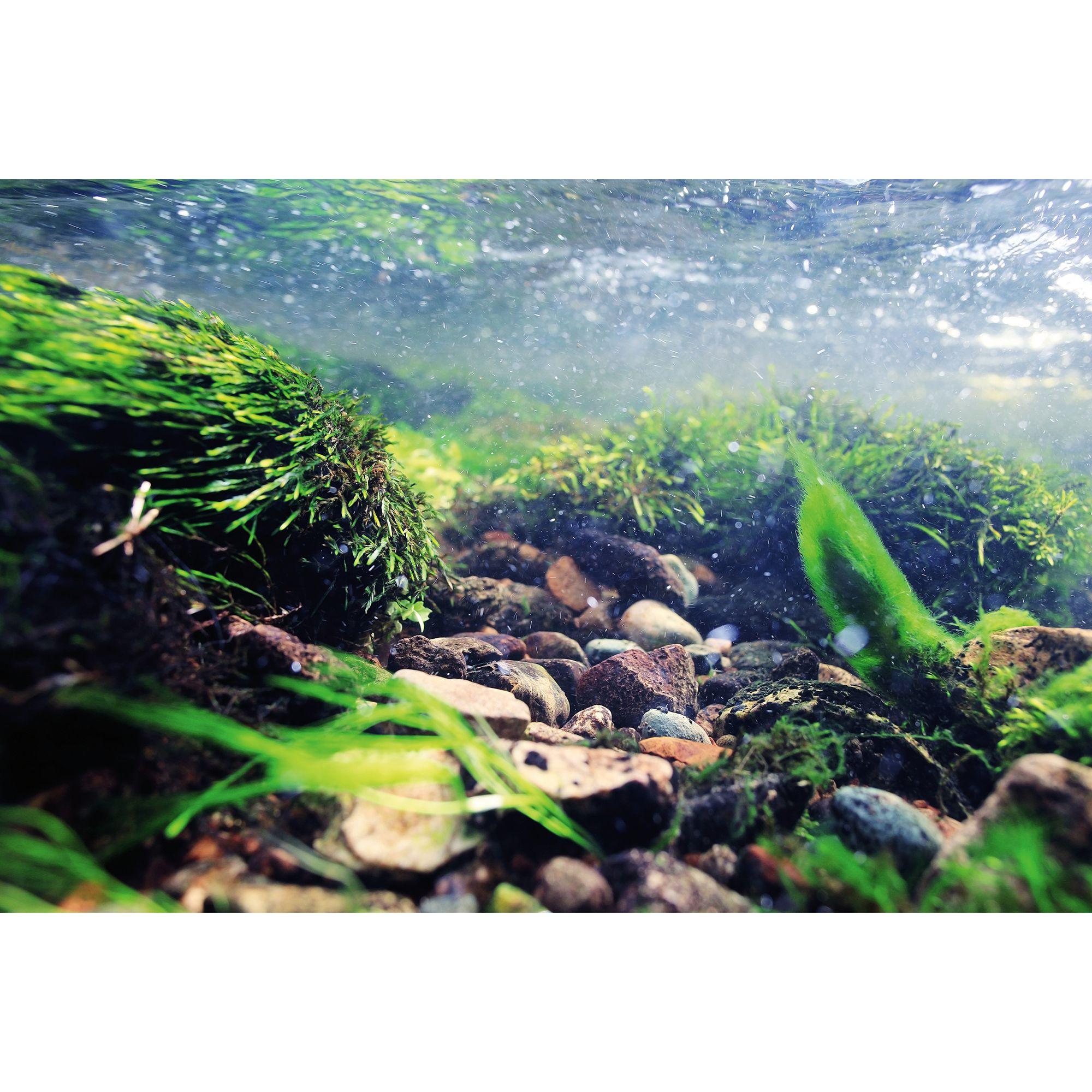 Top Fin Rock Underwater Reversible Aquarium Background Fish Backgrounds Petsmart