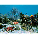 Top Fin® Coral Reef Aquarium Background