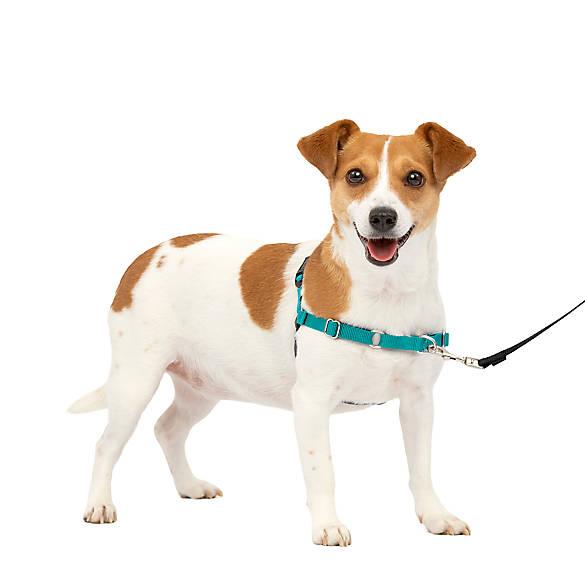 Petsafe 174 Easy Walk Dog Harness Dog Harnesses Petsmart