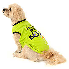 """Thrills & Chills™ Halloween """"I'm Here for the Boos!"""" Pet Tee"""